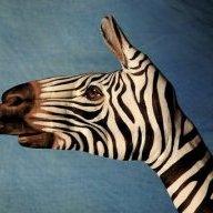 zebra.x6